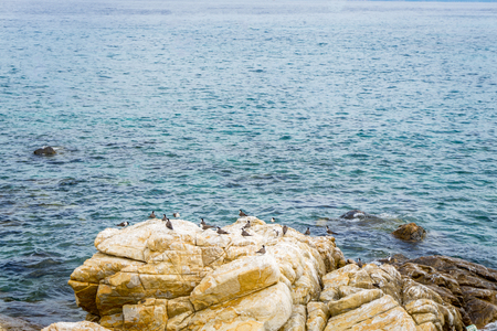 Birds in island Banco de Imagens