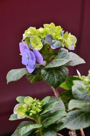 octagonal: octagonal flower