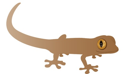 A brown lizard