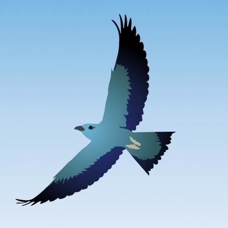 osprey: Blue bird