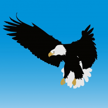 Bald eagle Ilustrace
