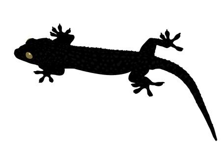 crawling creature: Gecko