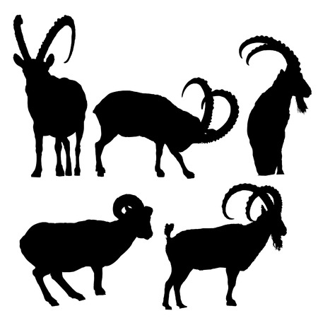mountain goats: ibex Illustration