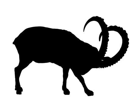 capra: ibex Illustration
