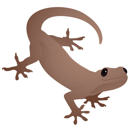 reptile skin: lizard Illustration