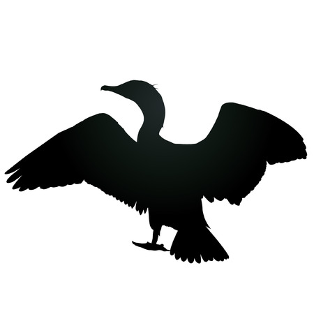 sea gull: sea gull