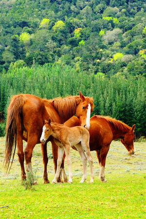 Family of horses in Hogsback, South Africa. Stock Photo