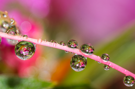 background pattern: water drops and dew on pink flower petal background. Macro picture after the rain