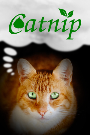Cats thought. Ginger cat with the world catnip in a dialog bubble. Concept illustrating what is inside cats head and mind