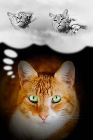 guess: Cats thought. Ginger wants to be petted and stroked. Concept illustrating what is inside cats head and mind