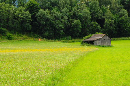 Falling apart old barn in a meadow, agricultural field, forest and trees in the background Stock Photo