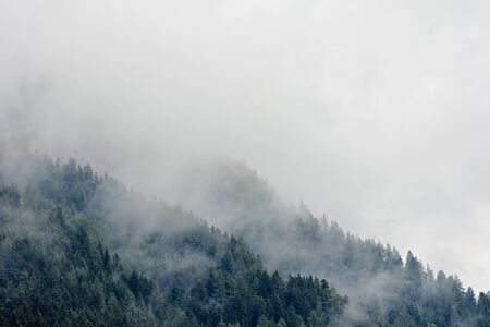 High altitude european forest in a summer foggy, misty day