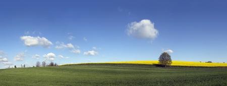 l natural: Spring landscape