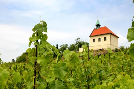 winegrowing: Vineyard with a chapel in the background. Stock Photo