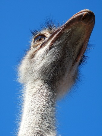 glance: Ostrich glance