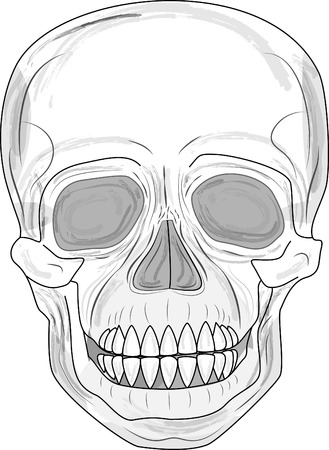 shocking: Human skull (illustration)