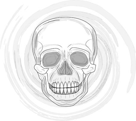 Menschlicher Schädel (Illustration)