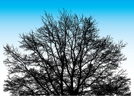 Big Vector Tree on the sky background Vector
