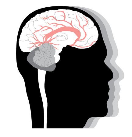 talamo: Cabeza humana con el cerebro, el perfil