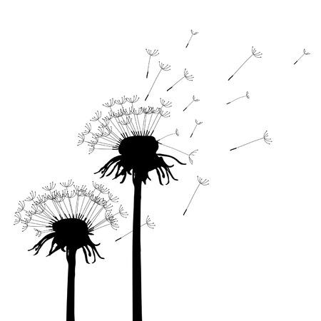 plant seed: Vector Dandelion
