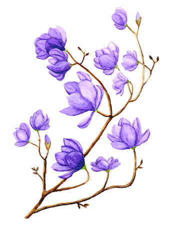 magnolia tree: Watercolor Magnolia Flower Illustration