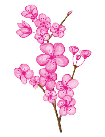 Watercolor-Kirschblüten-