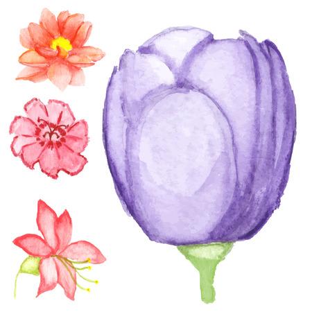 gerber daisy: Watercolor Flowers Illustration