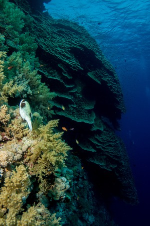 reefscape: Coral garden in the red sea