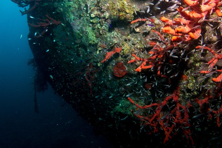 wreck of el mina in hurghada in egypt