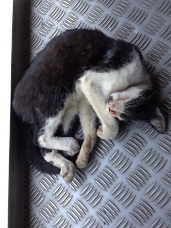 otganimalpets01: Lonely street cat Stock Photo