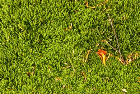 Carpet made of moss