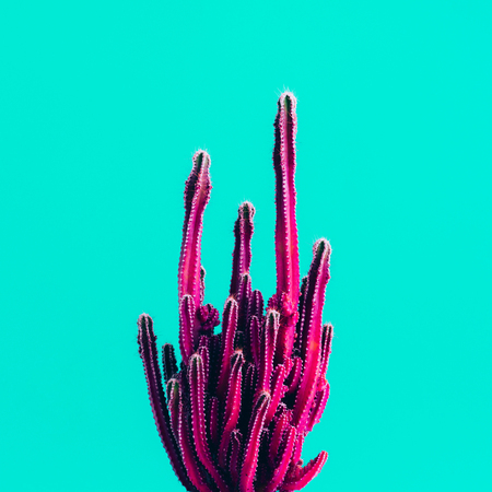 Exotic color of cactus on colorful background.Minimal.Abstract minimal design