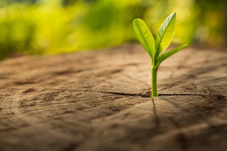 Neues Lebenkonzept mit wachsendem Sprössling des Sämlings (Baum). Geschäftsentwicklung symbolisch. Standard-Bild