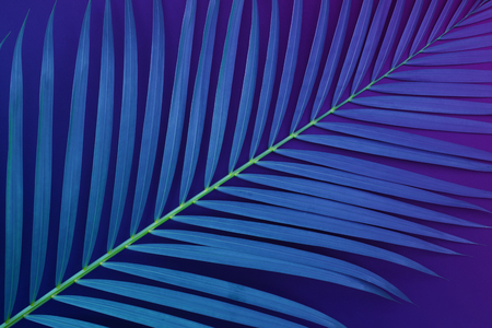 Tropical palm leaves with exotic color. nature desigh background.