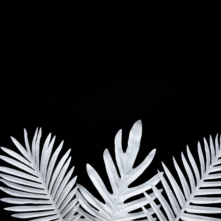 Collection of tropical leaves,foliage plant in black and white color with space background.Abstract leaf decoration design.Exotic nature for cover template
