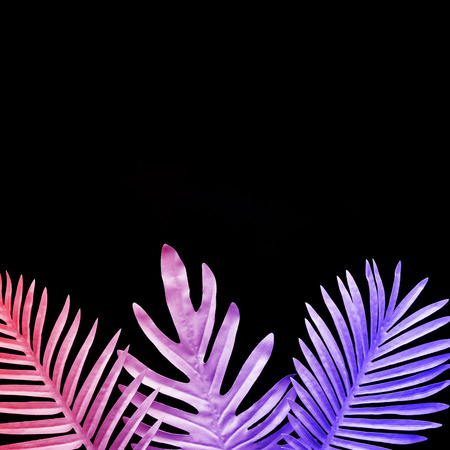 Collection of tropical leaves,foliage plant in gradient color on black background.Abstract leaf decoration design.Exotic nature for cover template