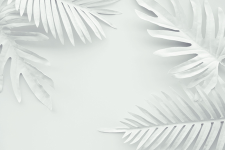 Collection of tropical leaves,foliage plant in white color with space background.Abstract leaf decoration design.Exotic nature for cover template
