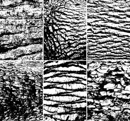 tree bark: Tree bark texture, vector collection