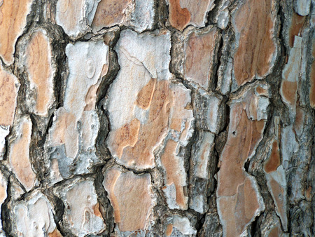tree bark: natural pine tree bark abstract background Stock Photo