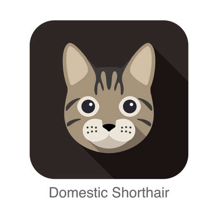 domestic animal: Domestic Shorthair, Cat breed face cartoon flat icon design