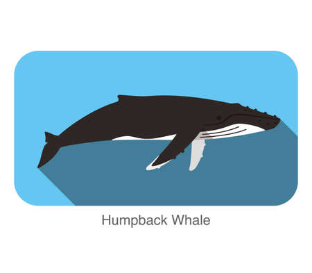 humpback: Humpback Whales swimming in the sea