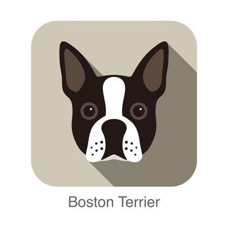 boston terrier: Boston terrier dog character Illustration
