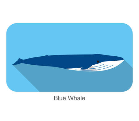 baleine bleue: Blue whale swimming in the sea flat icon design