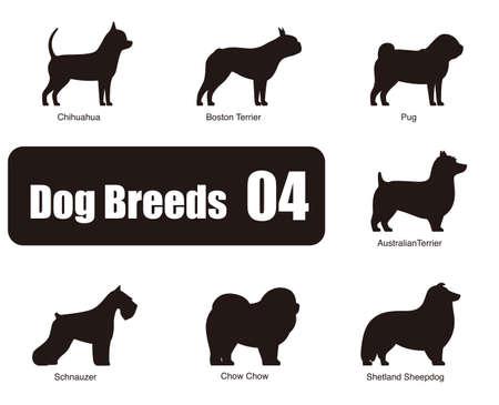 shetlander: Hondenrassen op de grond
