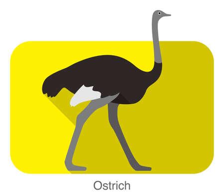 animal: Ostrich walking, animal body series