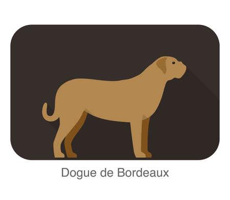 bordeaux: dogue de bordeaux dog standing and watching