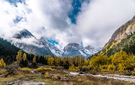 mountain landscape: forest and mountain landscape