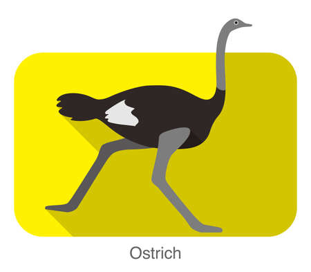 Ostrich running, animal body series