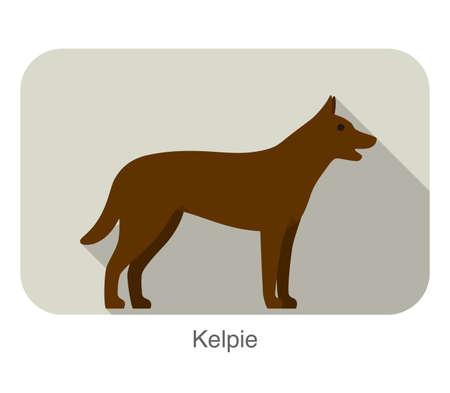 kelpie: kelpie dog standing side, walking, dog breed series