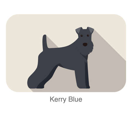 kerry blue terrier: kerry blue terrier standing an watching  flat icon design Illustration